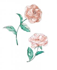 バラ 水彩