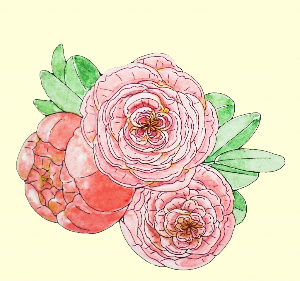Pioney&Centifolia Roses