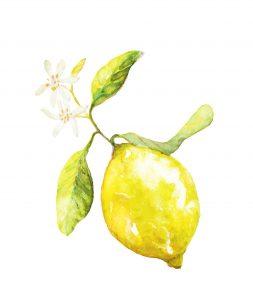 水彩 レモン